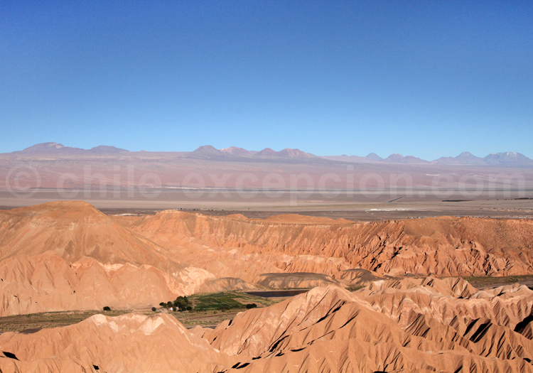 Catarpe, région d'Atacama