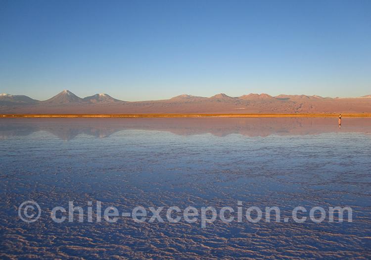 Lagune Chaxa, salar Atacama