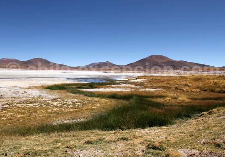 Altiplano, Chili