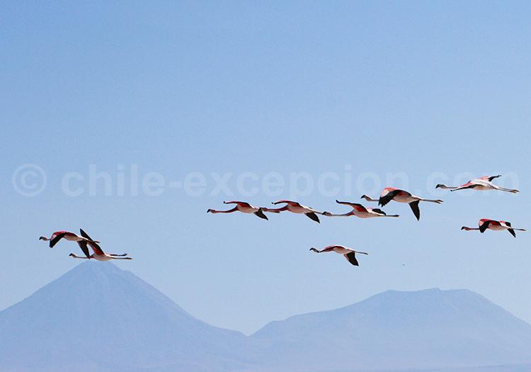 Visite guidée au coeur de l'Altiplano