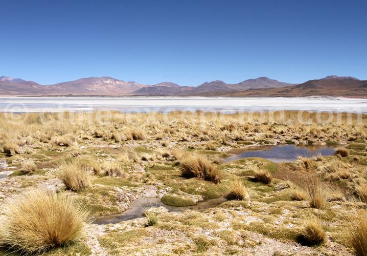 Désert de sel, Talar, Chili