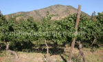 Escapade dans les vignobles chiliens
