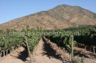 Vignes Santa Rita, Chili