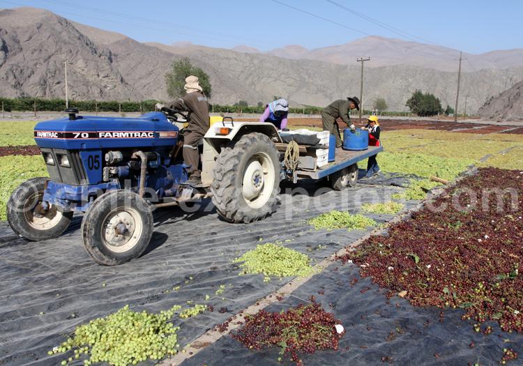 Travaux agricoles, route des vins, Chili