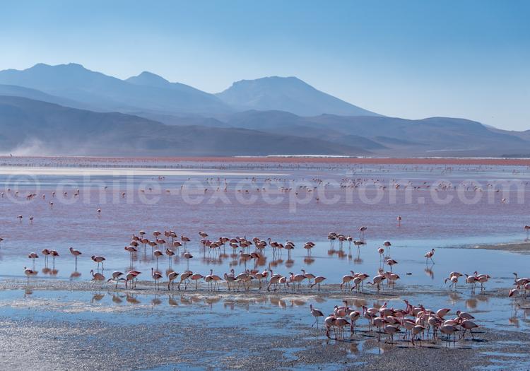 Laguna Roja, Bolivie