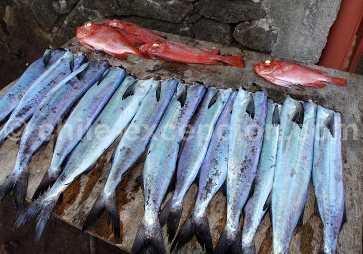 Marché aux poissons, littoral Nord du Chili