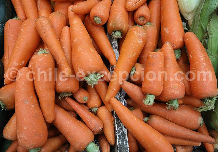 Carottes, Fruits et légumes du Chili