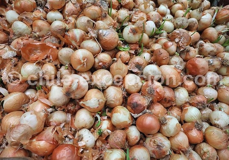 Oignons, Fruits et légumes du Chili