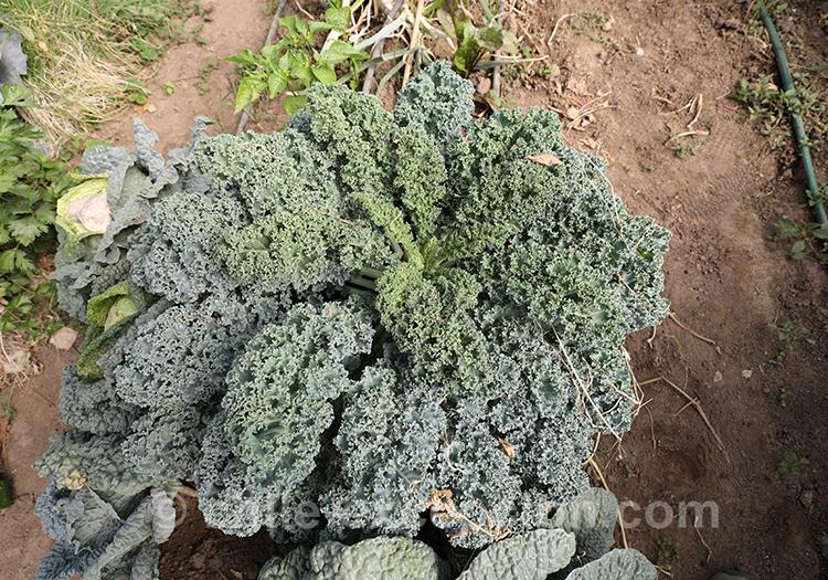 Quels sont les légumes du Chili avec l'agence de voyage Chile Excepción