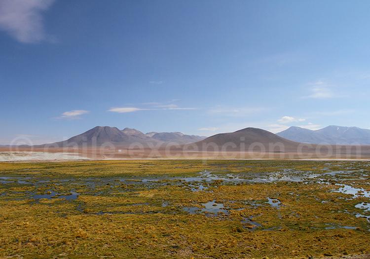 Laguna salada, Machuca, Atacama