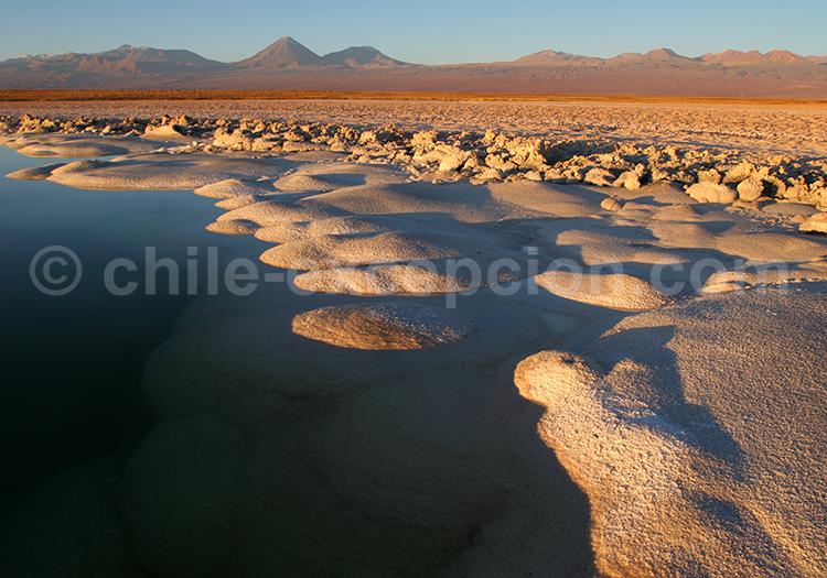 Voyage dans l'altiplano andin du Chili