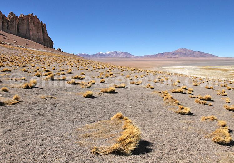 Salar de tara, Norte de Chile