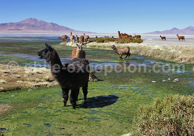 Safari photographique, Salar de Tara, Chili