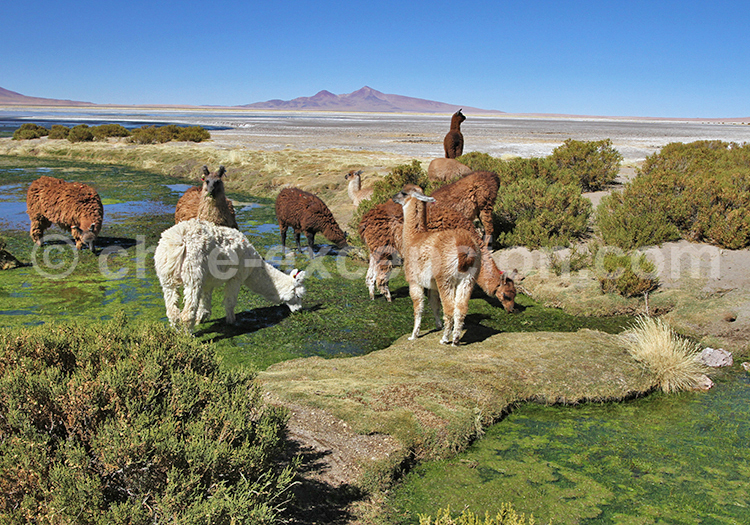 Voyage exceptionnel au Chili
