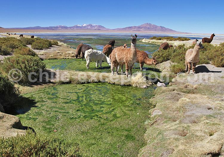Visite sur mesure, désert du Nord du Chili