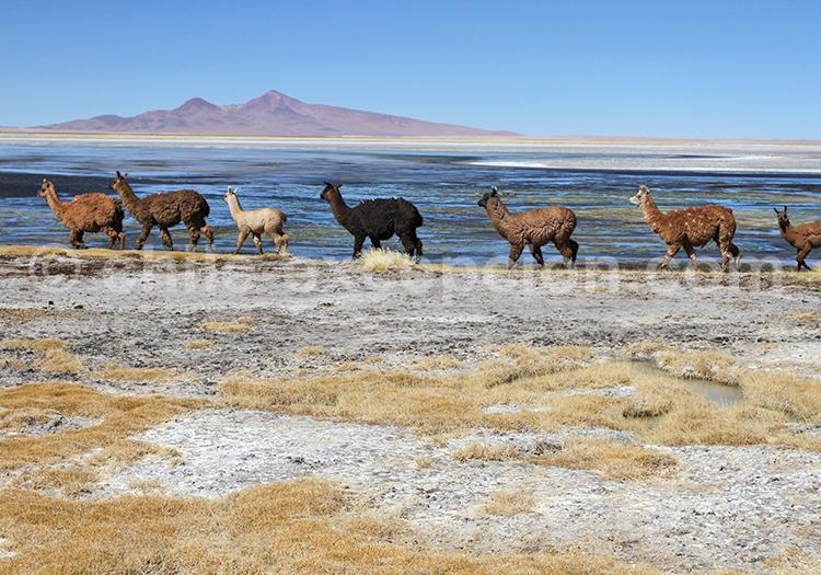 Merveilles de l'Altiplano, Chili