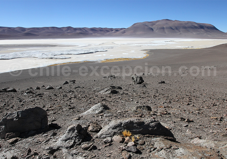 Salar de Pujsa, volcan Acamarachi