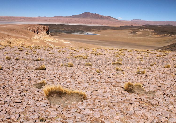 Salar de tara, Nord du Chili