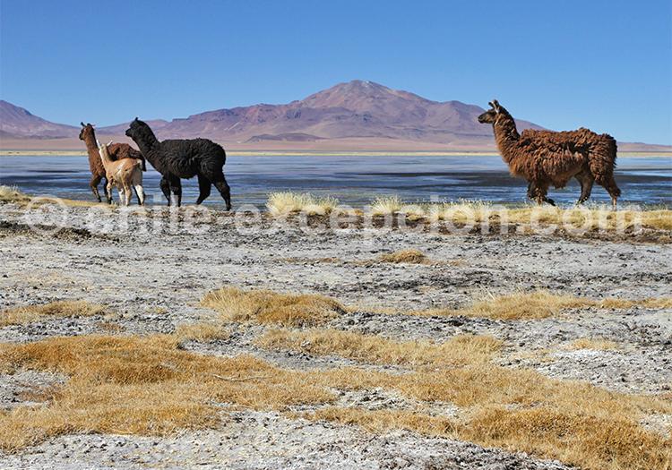 Paysages à couper le souffle, Nord du Chili