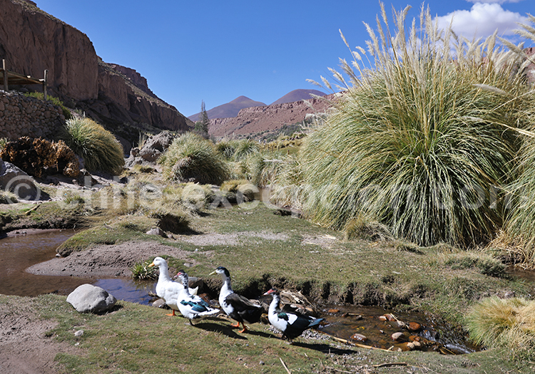 Agriculture des Andes