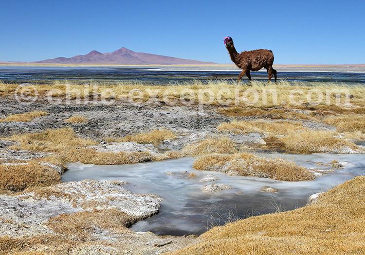 Excursion guidée, désert du Chili