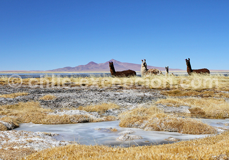 À ne pas manquer, désert du Chili