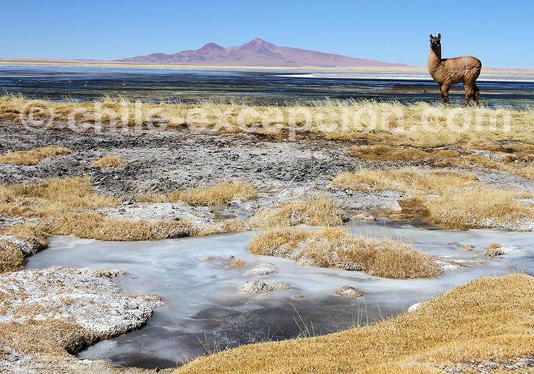 Parcours exceptionnel au coeur des Andes du Chili