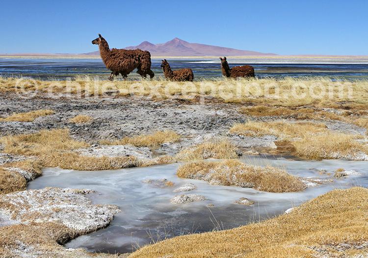 Balade sur mesure, désert du Chili