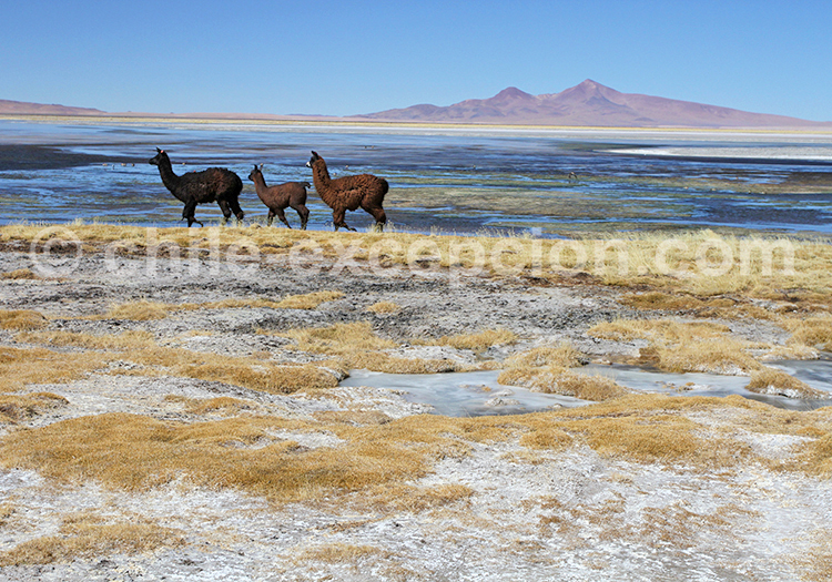 Frontière chilienne et argentine, salar de tara