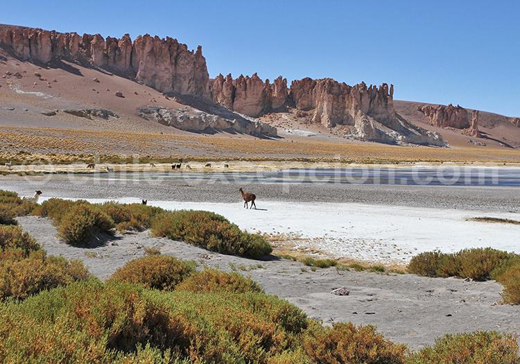 Voyage personnalisé, Salar de Tara, Chili