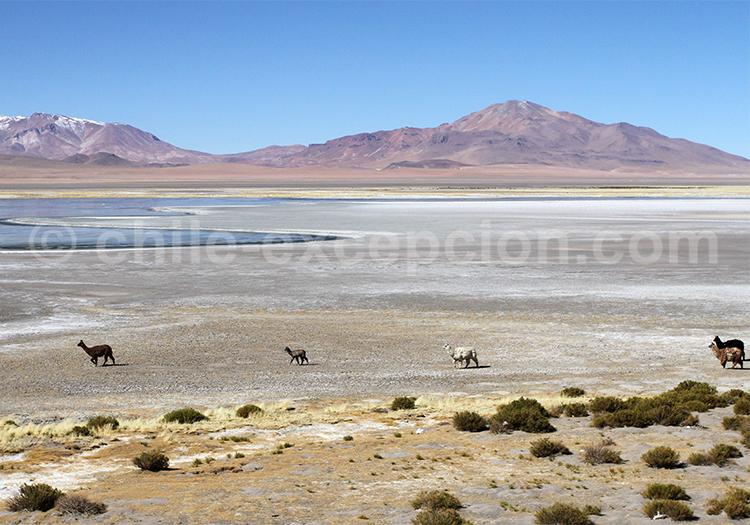 Voyage de luxe, Nord du Chili
