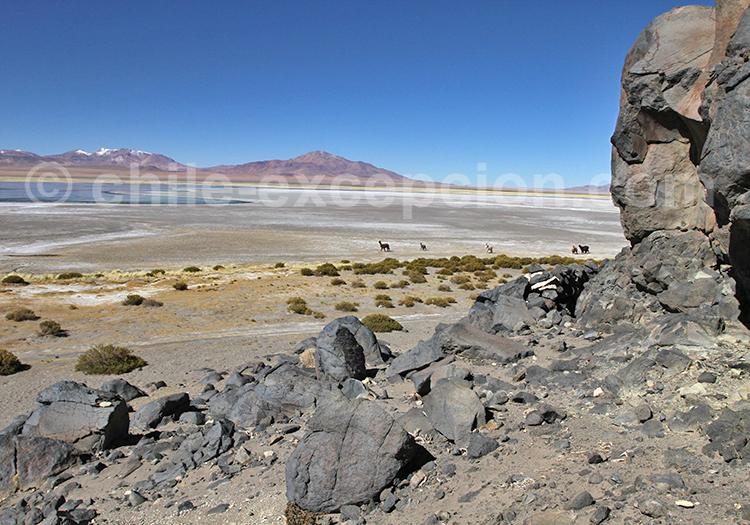 Étendue de sel dans le désert du Chili