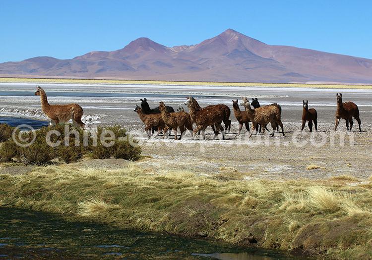 Excursion personnalisée dans les Andes du Chili