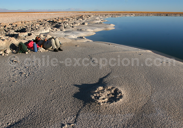 Que faire à Atacama