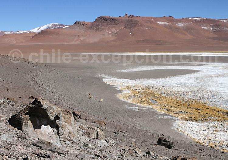 Salar de Pujsa, Chili
