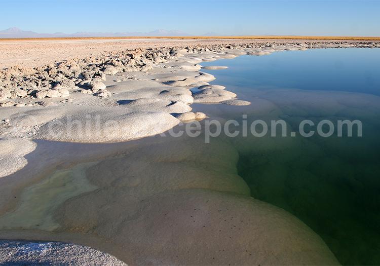 Laguna Cejar, mirador
