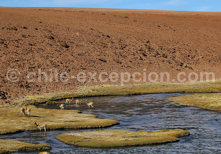 Voyage et excursion sur mesure, désert d'Atacama