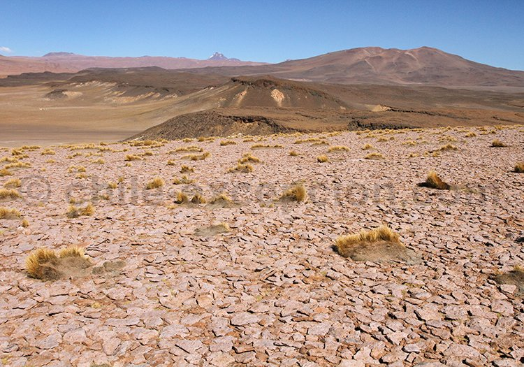 Salar de tara, désert du Chili