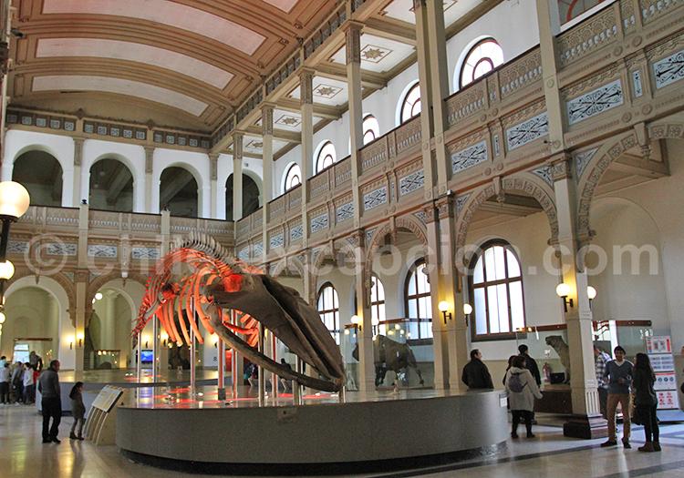 Musée d'Histoire Naturelle, Santiago