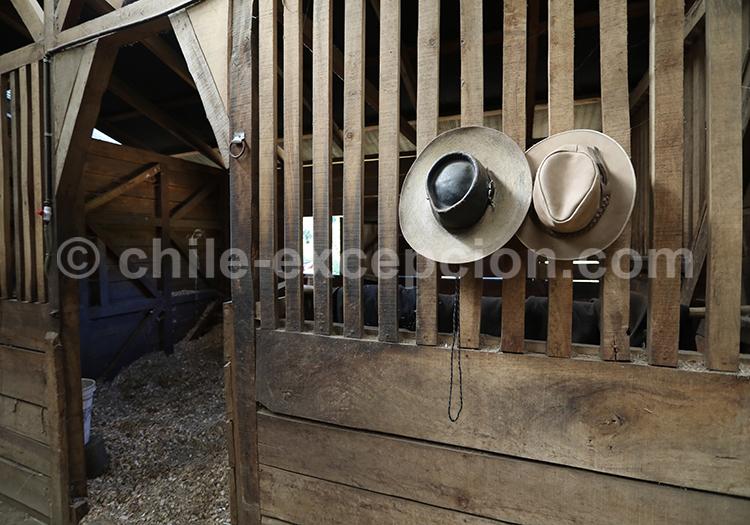 Chapeau huasos, Chilii