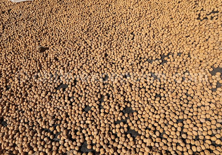 Production de noix, Chili