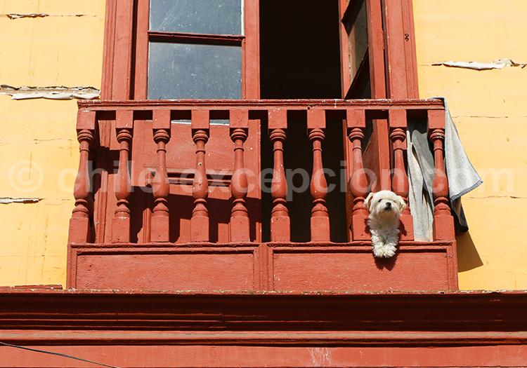 Balcon avec un chien dans une rue à Iquique