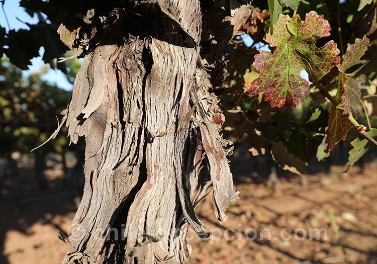 Ecorce d'arbre du Chili avec l'agence de voyage Chile Excepción