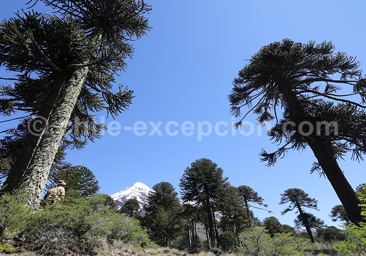 Reportage photo dans le Sud du Chili