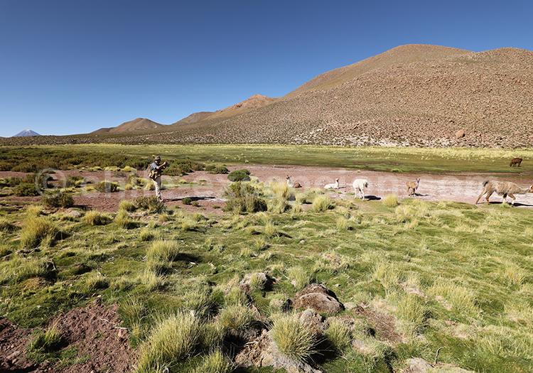 Photographe et faune locale, Nord du Chili
