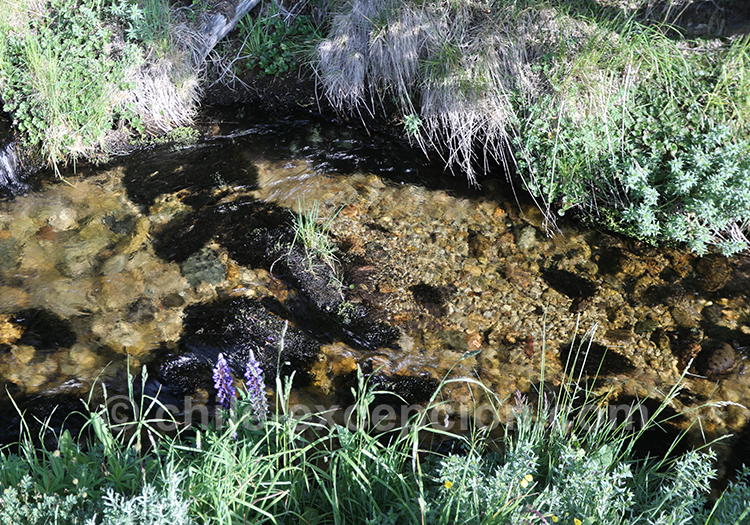 Petit ruisseau au Chili avec l'agence de voyage Chile Excepción