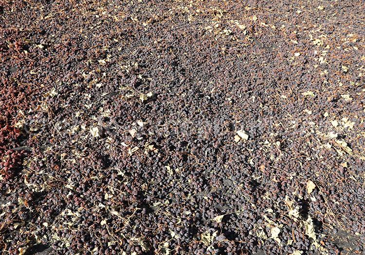 Produire du vin au Chili