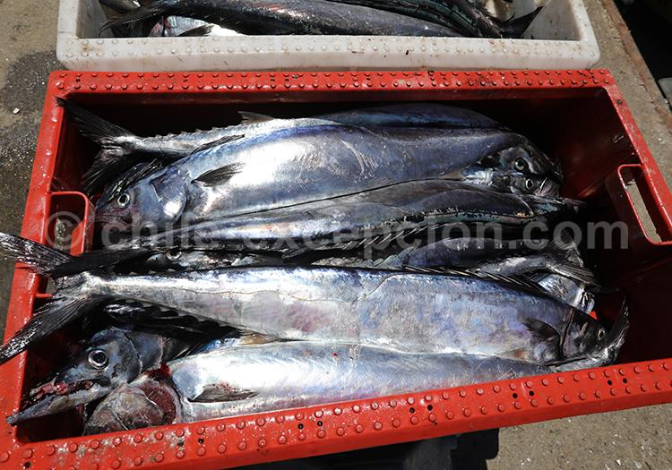 Pêche du Sud du Chili
