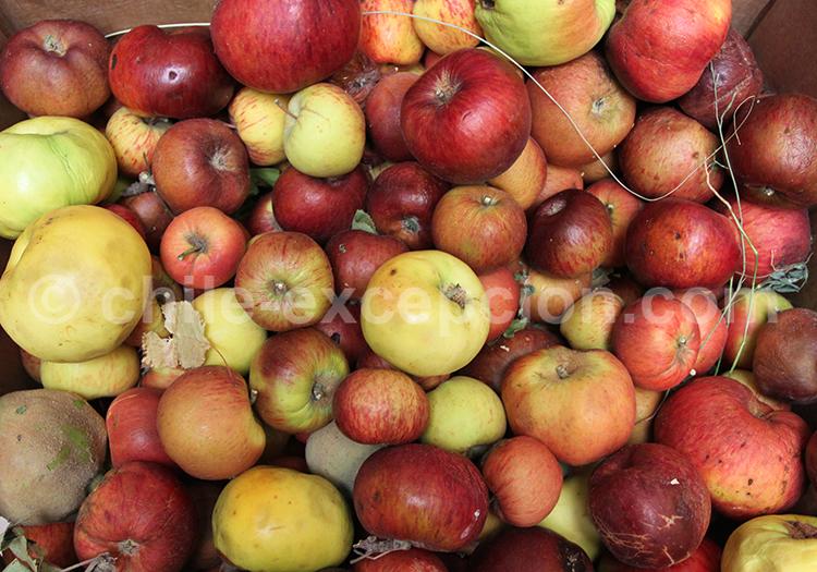 Mix de couleurs, fruits du Nord du Chili