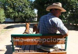 Départ pour une balade à cheval dans le vignes de Casa Real